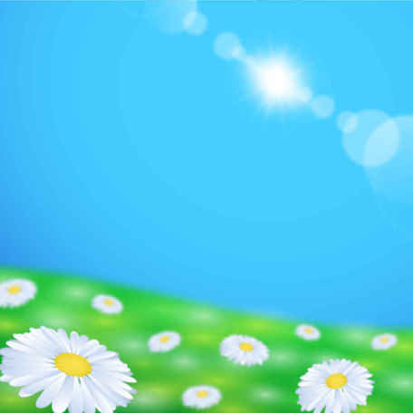 Daisy Flower Field Background, Vectors.