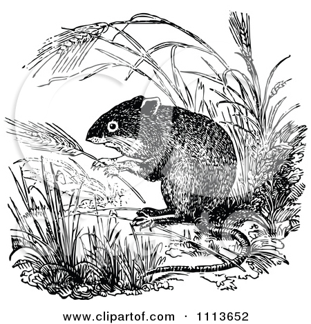 Clipart Vintage Black And White Field Mouse 1.