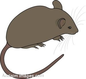 Field Mouse Free Clipart.