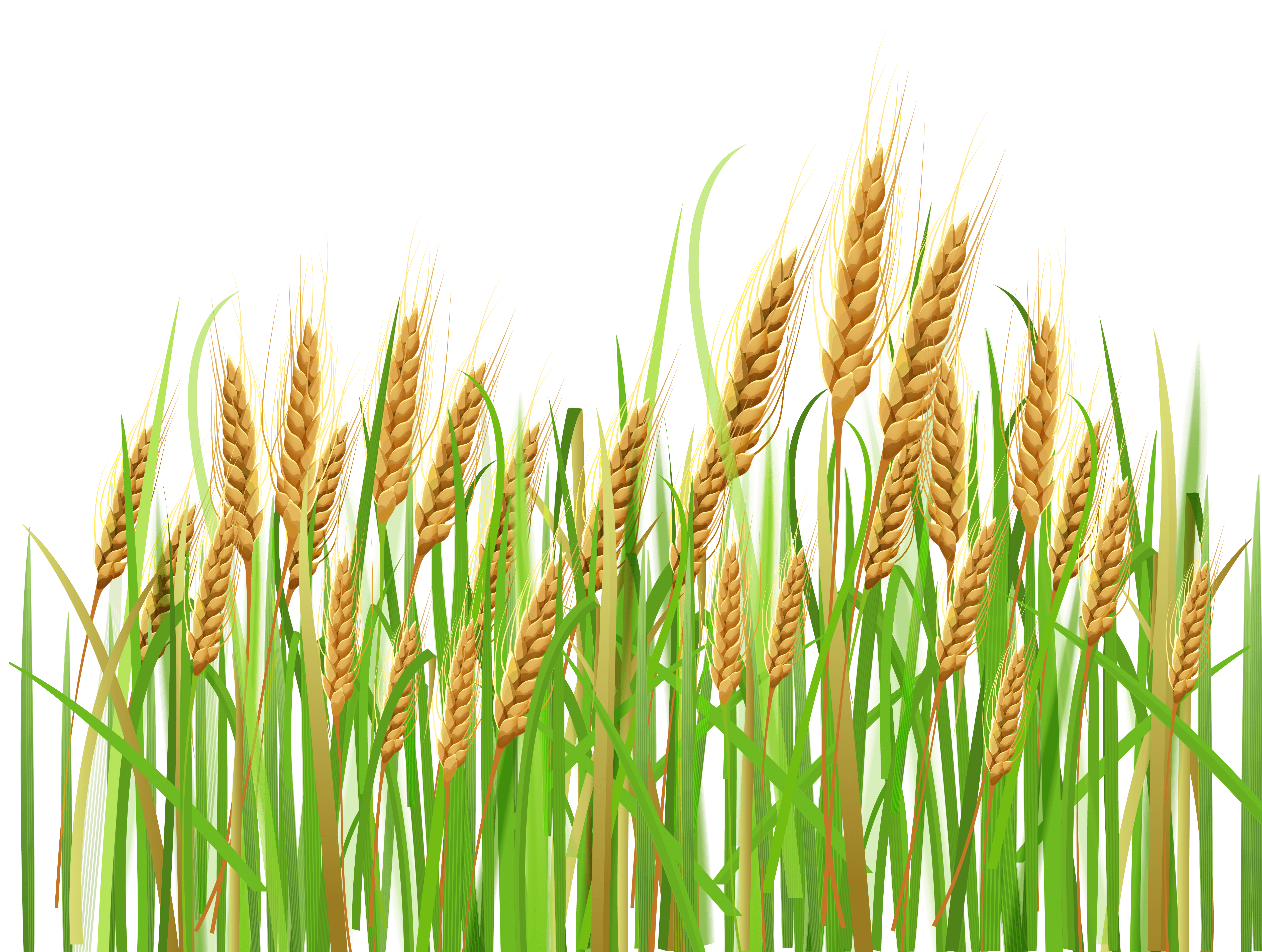 Free Agriculture Crop Cliparts, Download Free Clip Art, Free.