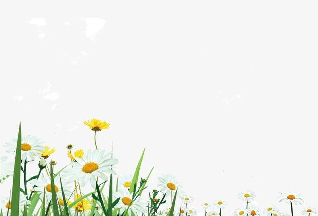 Wild Flowers Grass, Grass Clipart, Field, Flowers PNG Transparent.
