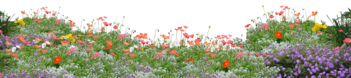 Field Of Flowers Png Vector, Clipart, PSD.