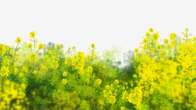 Flower Field Png, Vector, PSD, and Clipart With Transparent.