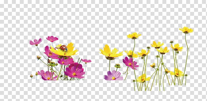 Floral design Yellow Flower, A field of flowers transparent.