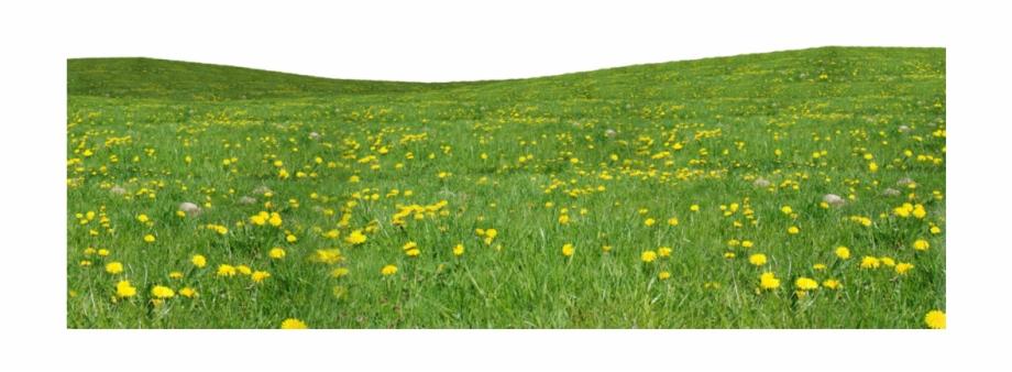 field #grass #flowers.