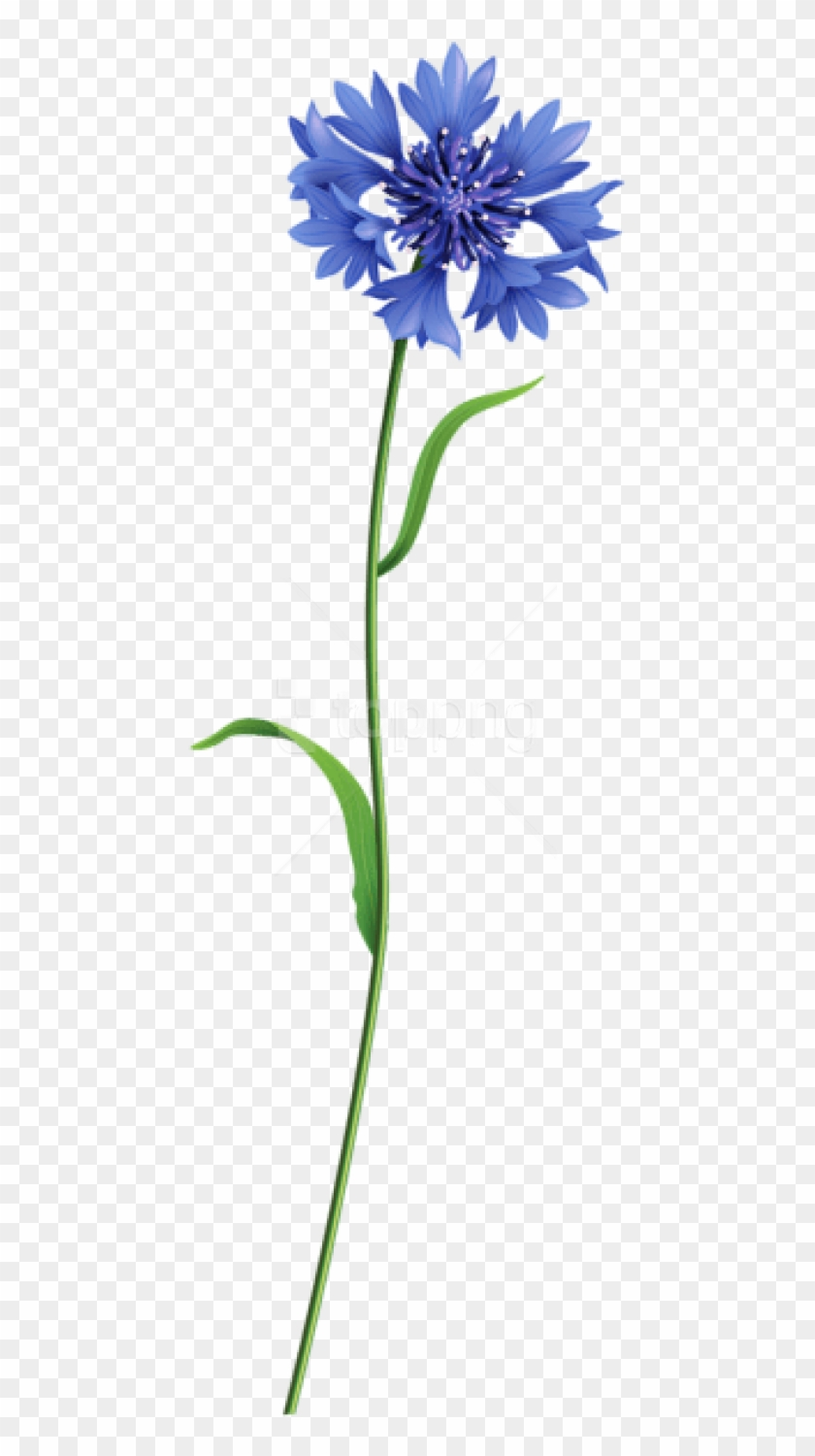 Free Png Download Blue Field Flower Png Images Background.