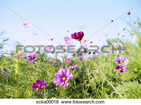 Pictures of summer meadow, spring awakening, flowers, flower.