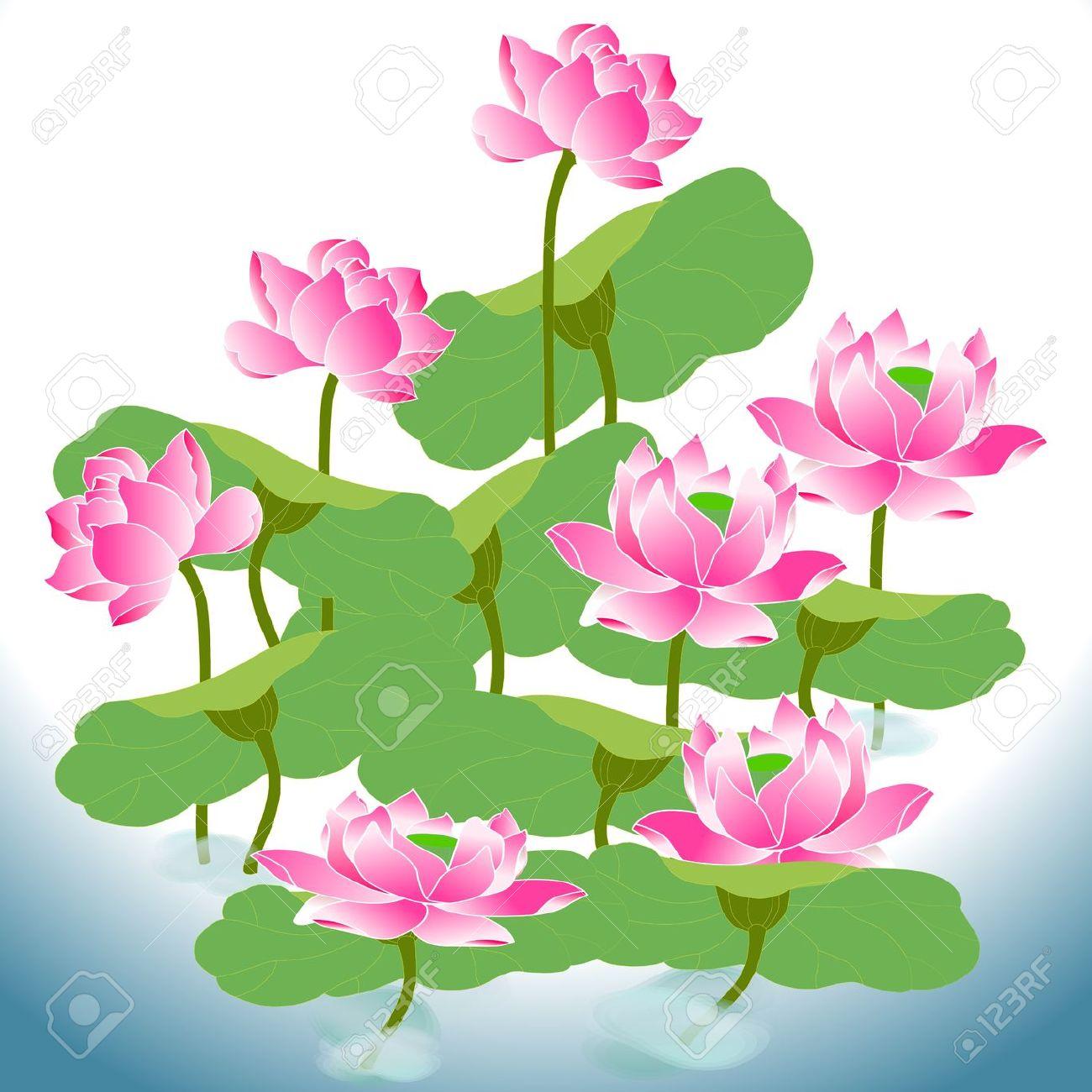 Beautiful Oriental Lotus A Flower In He Field Of Water Royalty.