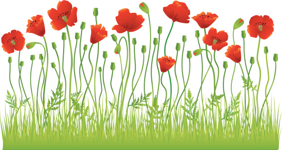 Poppy Flower Clip Art, Vector Images & Illustrations.