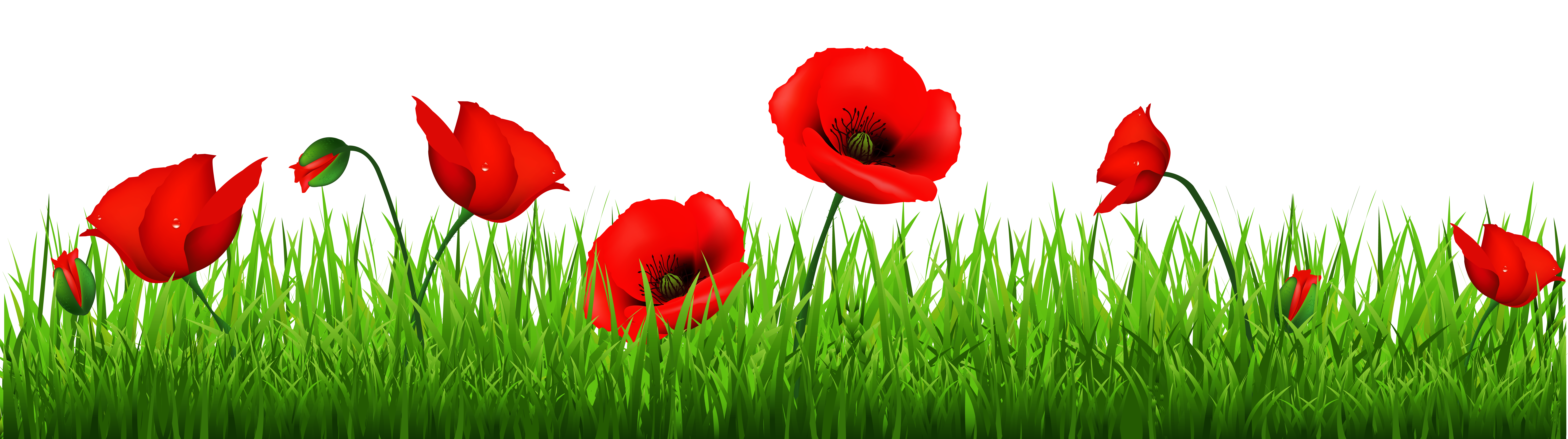 Free poppy clipart images.