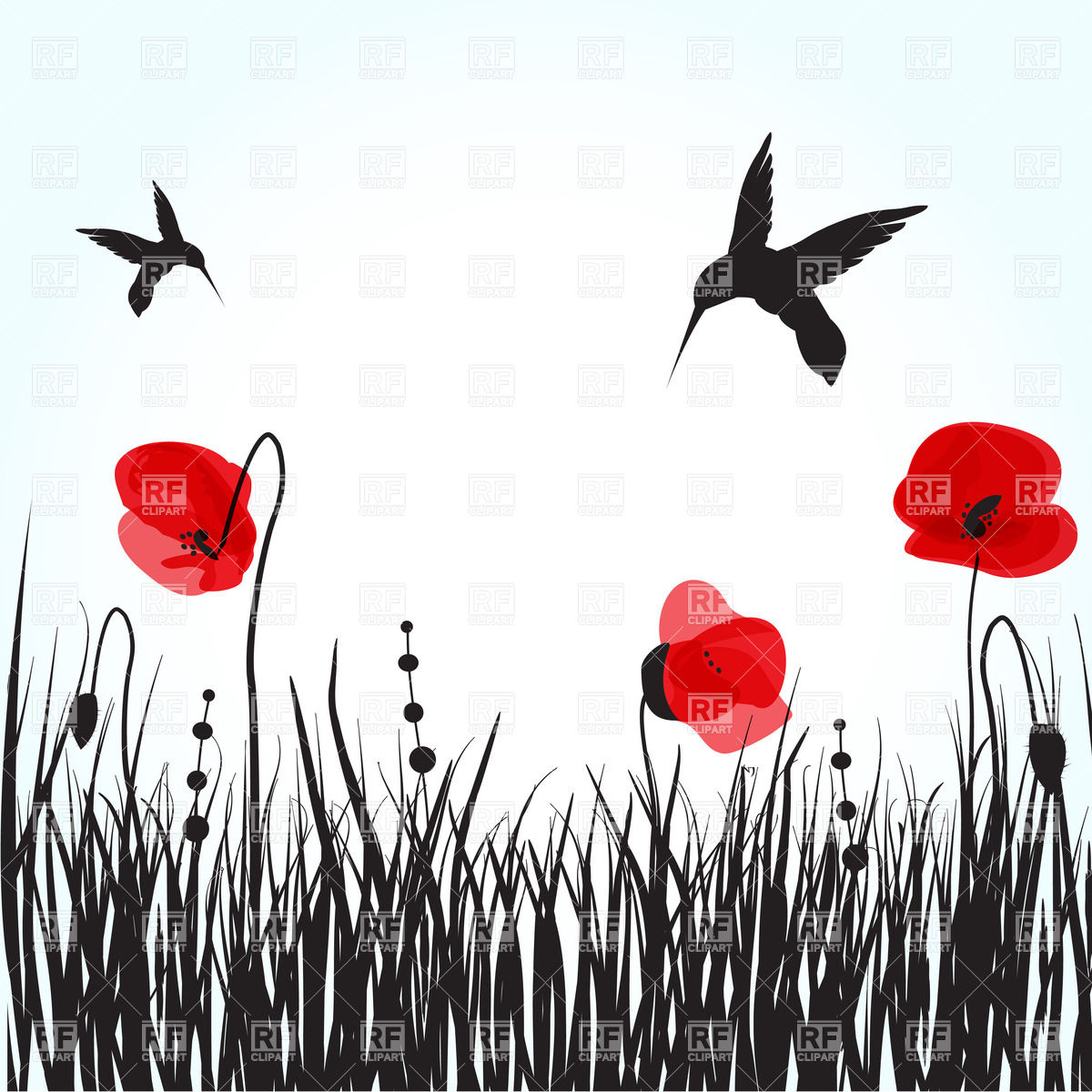 Silhouettes of hummingbirds over spring field with poppies Vector.