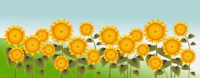 Field Sunflowers Blue Sun Sky Stock Illustrations.
