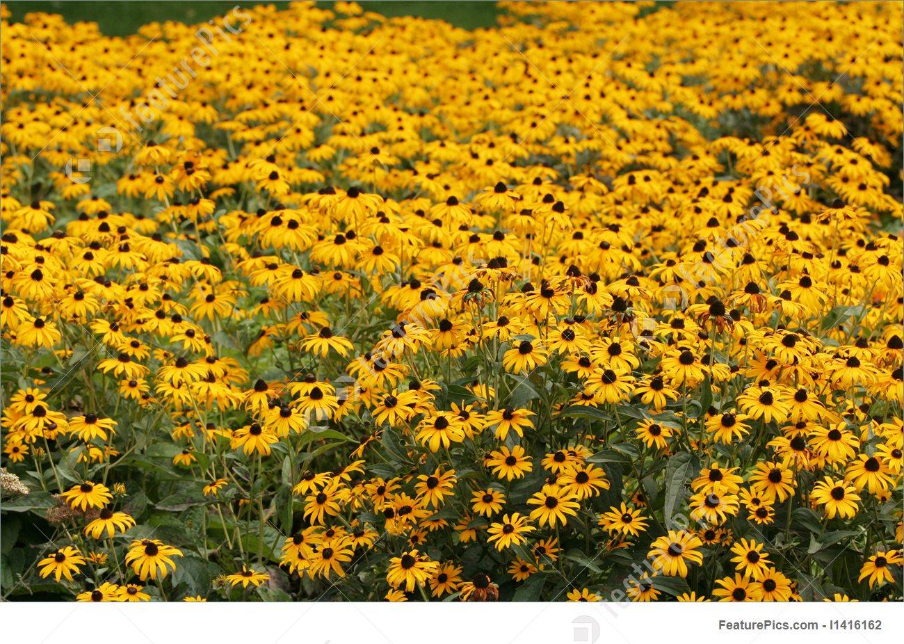 Flowers: Coneflowers.