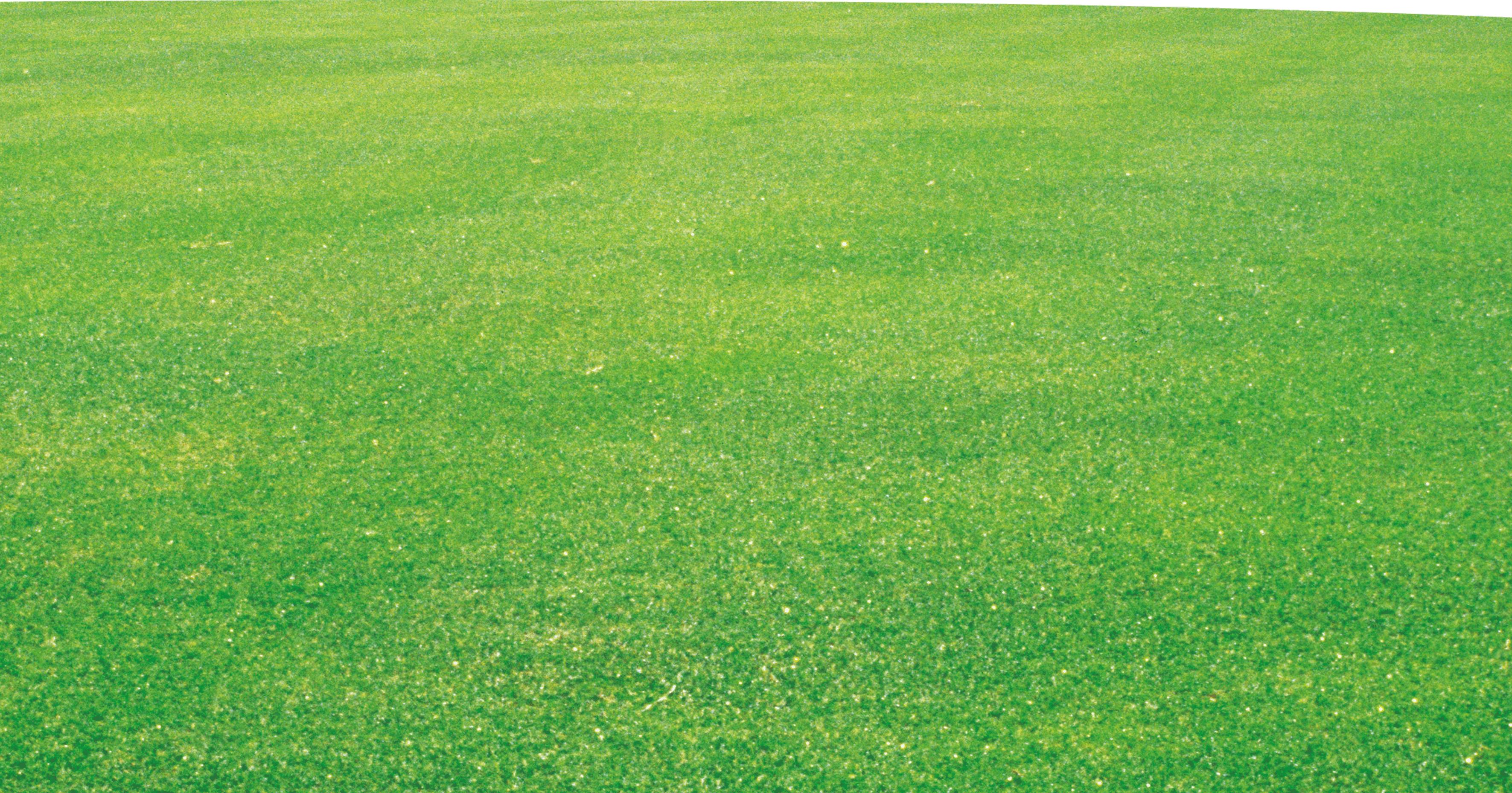 Crop Lawn Grassland Field Fodder.