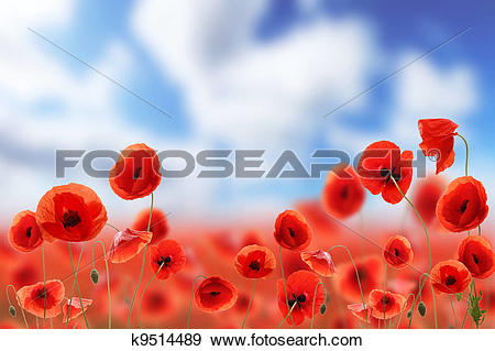 Poppies Stock Photos and Images. 49,983 poppies pictures and.
