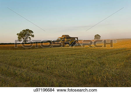 Stock Photo of Crop field of oil seed rape and combine harvester.