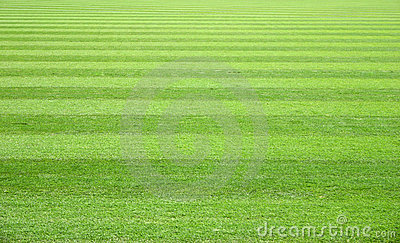 Grass Field Royalty Free Stock Images.