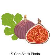 Fig Clip Art.