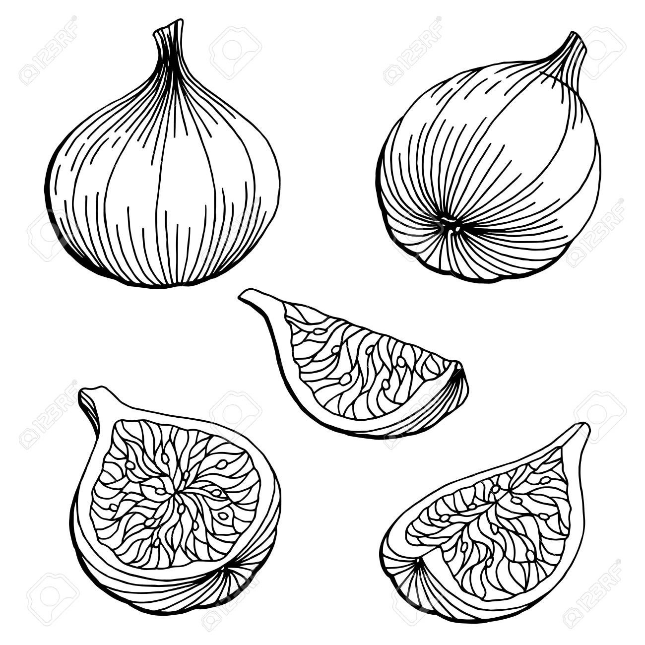 Fig graphic set black white isolated sketch illustration vector..