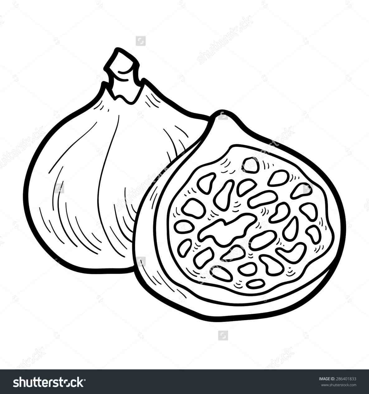 Fig clipart black and white » Clipart Station.