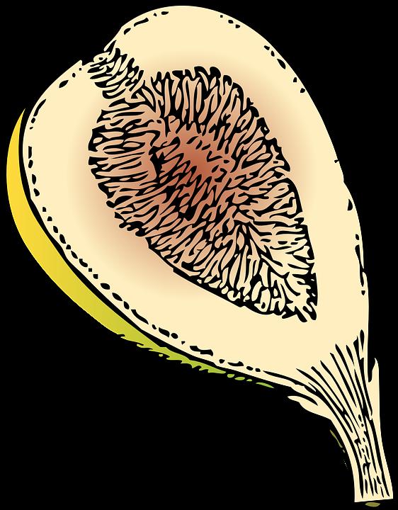 Fig, Fruit.