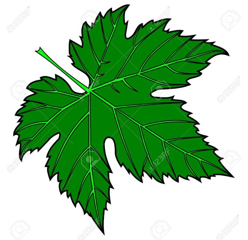 Fig Leaf Clip Art Free.