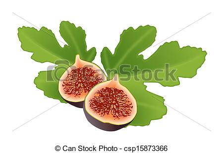 Fig leaf Vector Clipart EPS Images. 283 Fig leaf clip art vector.