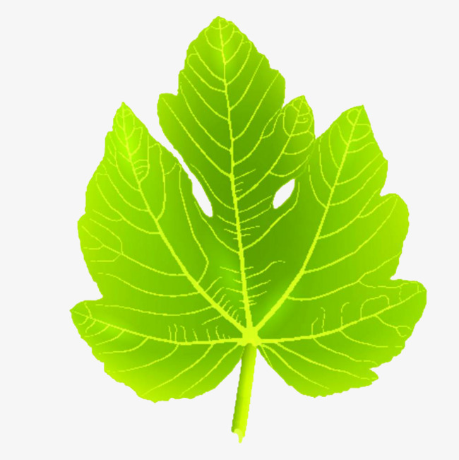 Fig Leaves Clipart.