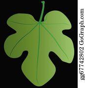 Fig Leaf Clip Art.