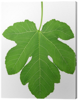 Download Fig Leaf PNG Image with No Background.