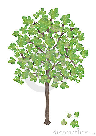 Fig Tree Clipart.
