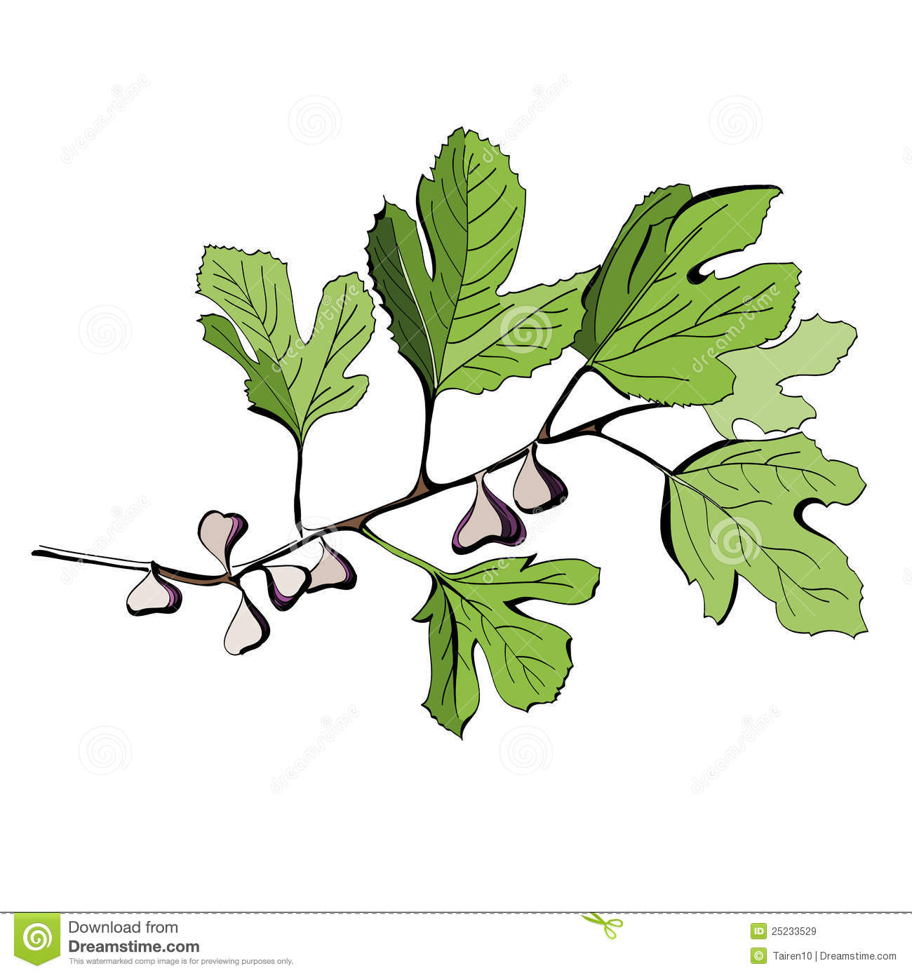Fig Tree Stock Illustrations.