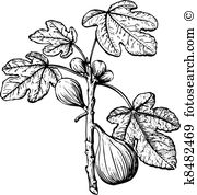 Fig tree Clip Art and Illustration. 121 fig tree clipart vector.