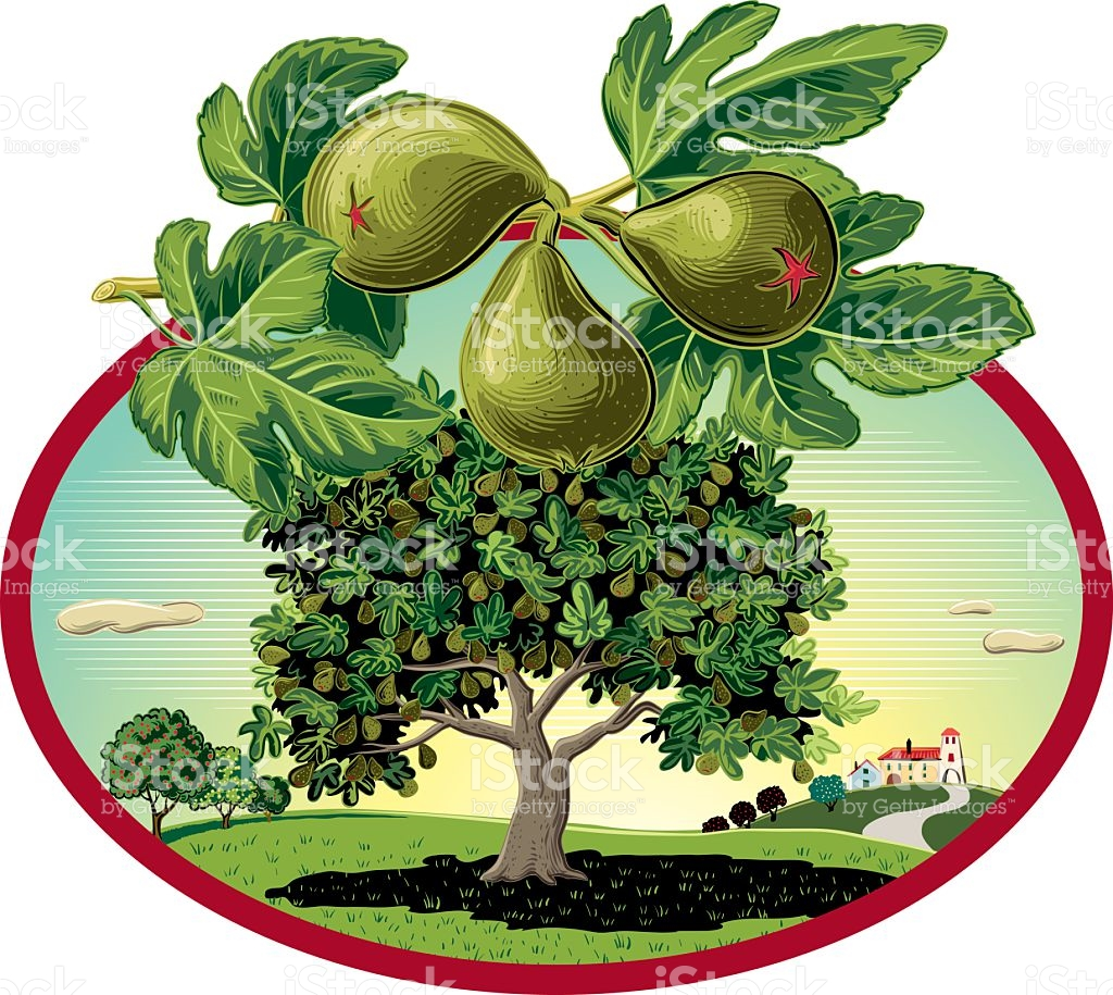Fig Clip Art, Vector Images & Illustrations.