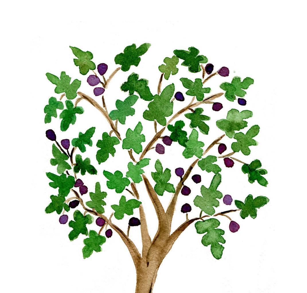 Barren fig tree clipart illustration.