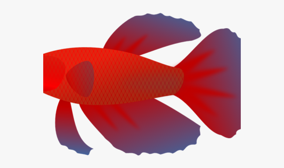 Betta Fish Clipart No Background #868643.
