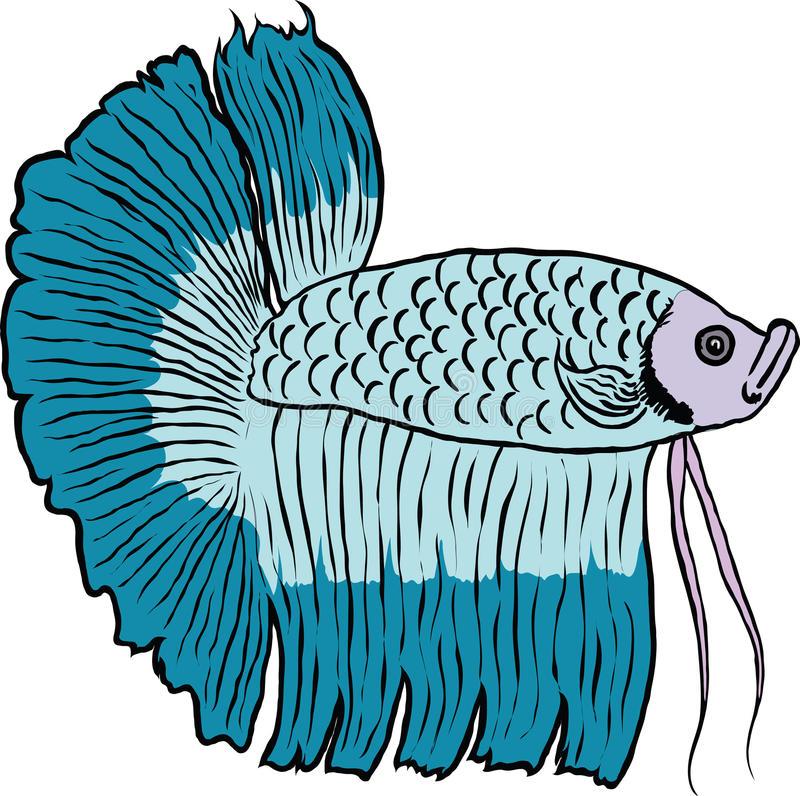 Betta Fish Stock Illustrations.