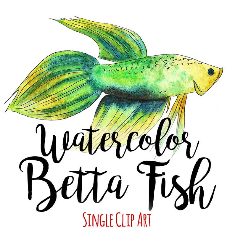 Watercolor Betta Fish Clip Art Commercial Use, Siamese Fighting Fish,  INSTANT DOWNLOAD, Hand Drawn Fish Outline Clipart, Sea Animal Clipart.