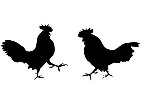 300 Cock Fighting Stock Illustrations, Cliparts And Royalty Free.