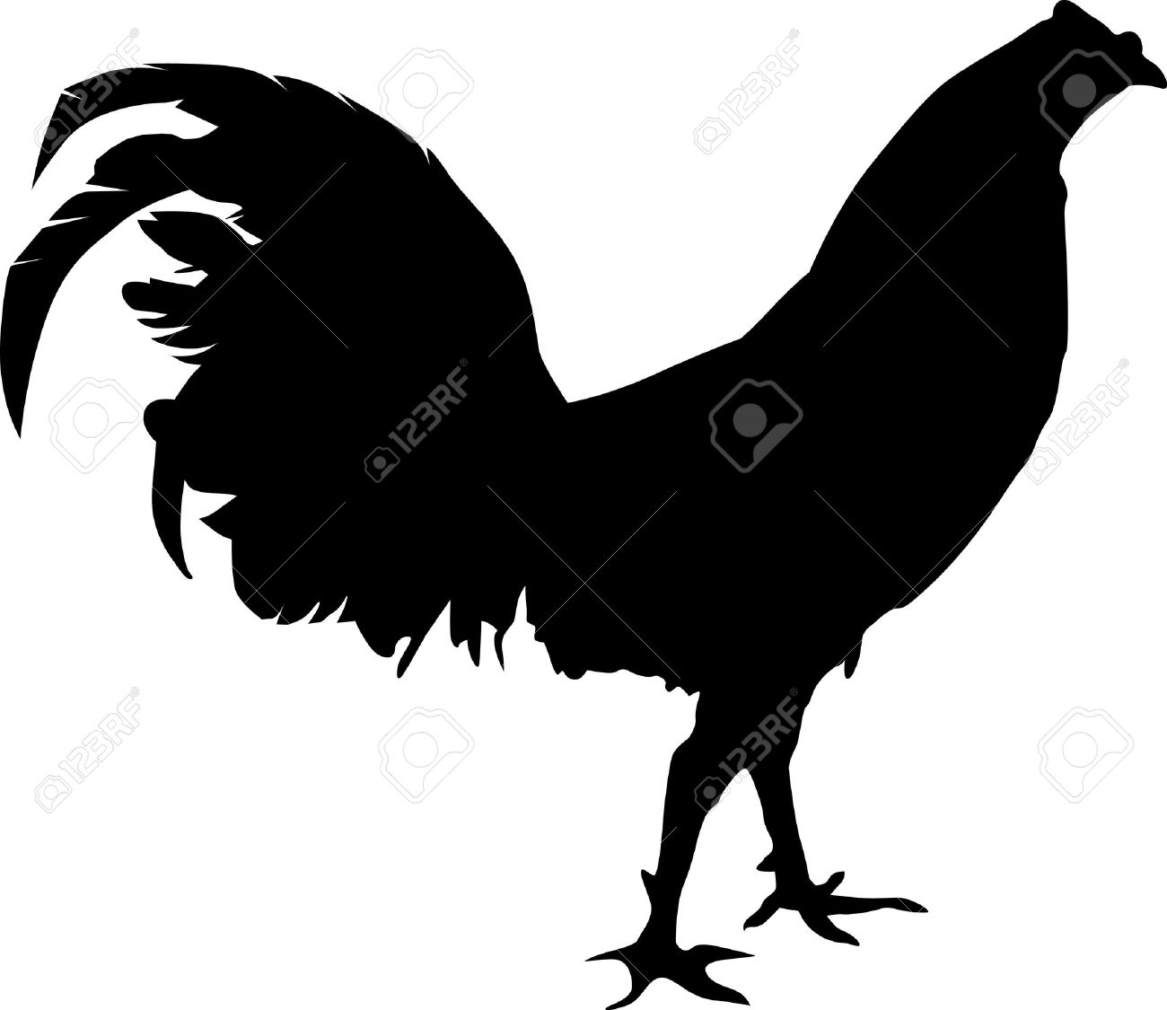 Fighting rooster silhouete walking around.