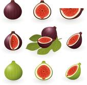 Figs Clip Art EPS Images. 1,038 figs clipart vector illustrations.