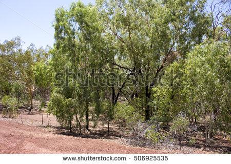 Bushy Tree Stock Photos, Royalty.