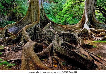 Tree Taman Negara Jungle Borneo Malaysia Stock Photo 84747004.