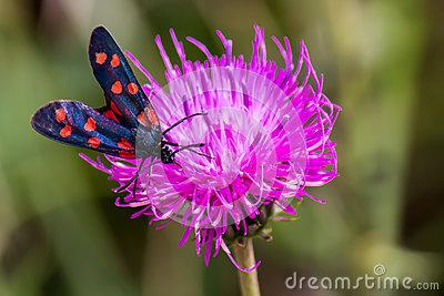 A Moth Six.