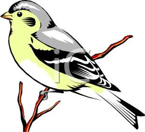 Colorful Cartoon of a Finch.