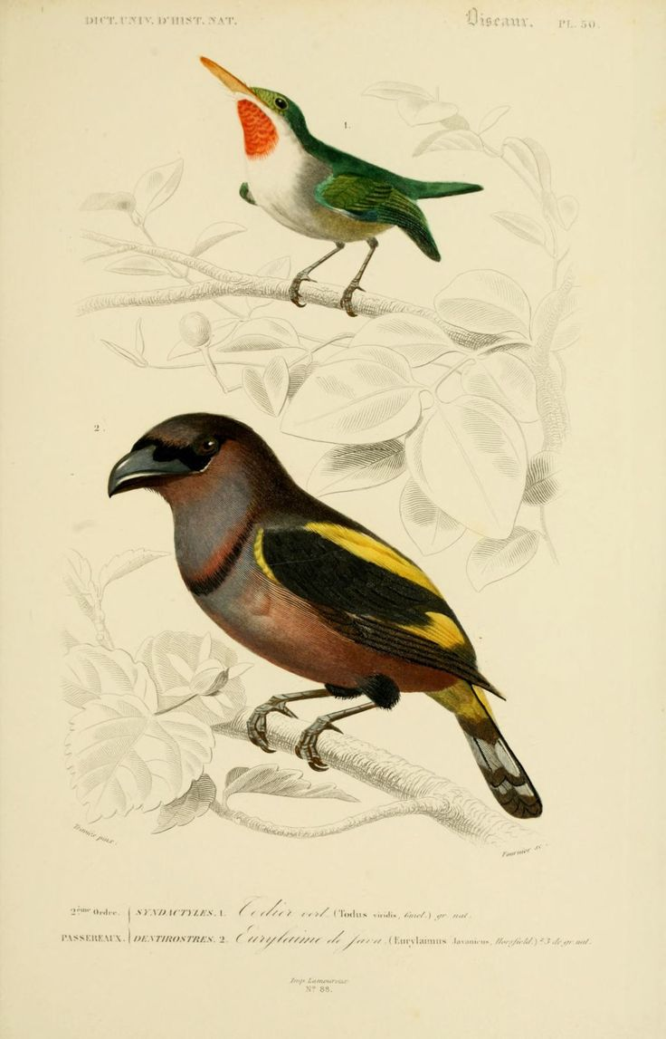 1000+ images about Oiseaux on Pinterest.
