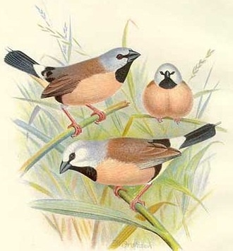 1000+ images about Free Vintage Bird Graphics on Pinterest.