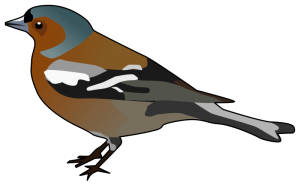Finch Clip Art Download.