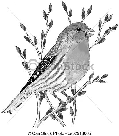 Finch Illustrations and Clip Art. 479 Finch royalty free.