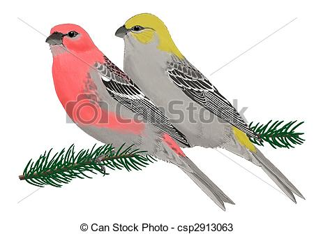 Finches Illustrations and Clip Art. 479 Finches royalty free.